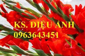 Chuyên cung cấp cây giống, củ giống hoa lay ơn (hoa dơn) số lượng lớn, đủ màu, đủ size, chất lượng đảm bảo