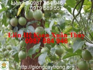Bán Giống Cây Chanh Bốn Mùa, Chanh Đào, Chanh Không Hạt