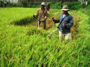 Đại lý phân phối độc quyền máy cắt lúa cầm tay Honda chính hãng