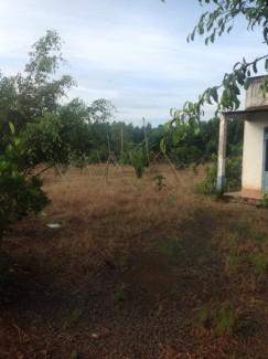 Bán đất với vườn cây ăn trái ao cá có điện nước và nhà cấp bốn