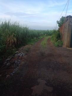 Bán đất khu chăn nuôi tập trung của huyện