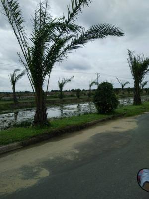 Gần hồ sinh thái trải dài 1km, giúp điều hoà không khí và mang hơi gió tự nhiên cho mọi nhà