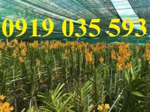 Lưới che nắng thái lan chuyên dùng sân vườn, hoa lan