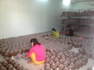 Chuyển giao công nghệ sản xuất giống nấm các loại