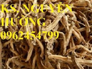 Bán giống cây đẳng sâm (cây sâm dây), hạt giống cây đẳng sâm và sản phẩm đẳng sâm sấy khô chất lượng cao