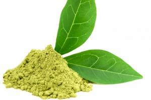 Bán nguyên liệu Gree tea Extract (Chiết xuất...