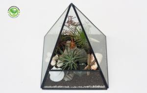 Kim tự tháp terrarium