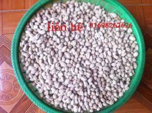 Hạt xoan ta chất lượng cao - bán hạt giống lâm nghiệp
