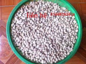 hạt xoan ta giống - bán hạt giống lâm nghiệp