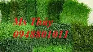 Cỏ nhân tạo sân vườn giá tốt,thi công cỏ nhân tạo,cung cấp cỏ giá rẻ trang trí