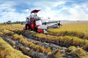 Máy gặt đâp liên hợp Yanmar