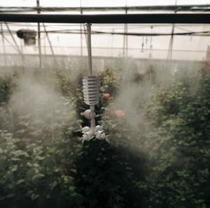 Vòi phun sương Coolnet Israel tưới lan trong nhà kính