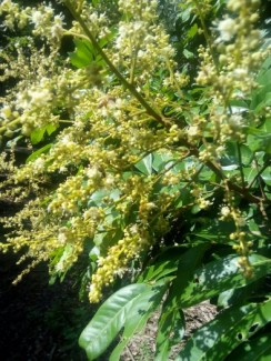 Mật ong nguyên chất 100% đảm bảo uy tính làm ăn lâu dài