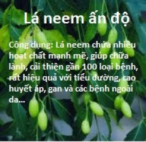 Công dụng tuyệt vời của lá neem ấn độ với sức khỏe