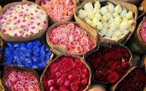 Hoa hồng tươi