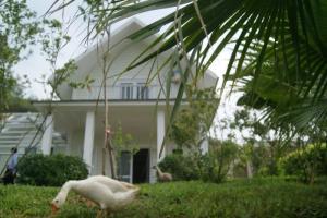 vườn nhà khu nghỉ dưỡng sunset villas