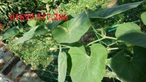 Lưới nông nghiệp định hướng phát triển cho cây trồng