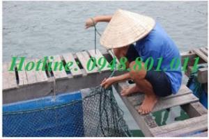 Lưới lồng nuôi cá xuất xứ từ nhật chất lượng bền, cần đổ sỉ số lượng lớn