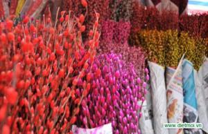 Bán sỉ, bán buôn hoa tầm xuân số lượng lớn