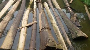 Bán gỗ xoan đâu, gỗ cây mận và cây cảnh.