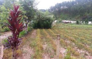 Đất nông nghiệp chân đèo mimosa giá mềm - đà lạt