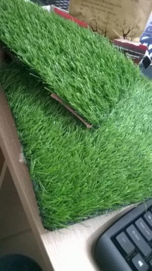 Cỏ trang trí sân vườn tại Hà Nội
