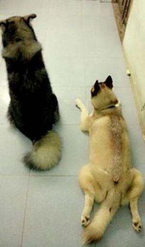 Tìm chủ mới cho 2 bé cún