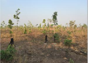 Hiện nay chúng tôi có 1800ha(nếu có nhu cầu hơn vẫn có) ở Đaklak đất sản xuất nông lâm