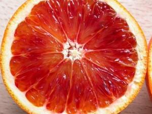 Chuyên cung cấp cam cara ruột đỏ, cây giống cara ruột đỏ không hạt,cam cara ruột đỏ từ úc
