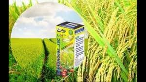 Phân bón sinh học công nghệ nano goldtech g05- chuyên cho cây lúa
