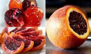 Chuyên cung cấp giống cây cam máu, cây giống cam máu, giống cam chất lượng cao
