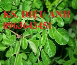 Chuyên cung cấp hạt giống, cây giống đẳng sâm, số lượng lớn, bao tiêu sản phẩm đầu ra. Liên hệ 0963643451