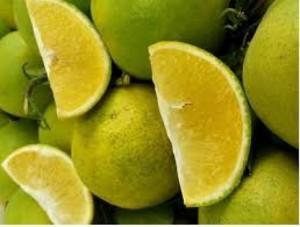 Chuyên cung cấp giống cam xoàn, cây giống cam xoàn, cam xoàn,cam, giống cây cam xoàn