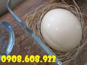Trứng đà điểu KHATACO Khánh Hoà, đại lý thịt đà điểu Khataco Tiền Giang,