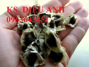 Chuyên cung cấp các loại hạt giống chùm ngây, cam kết chuẩn giống, giao hạt toàn quốc.