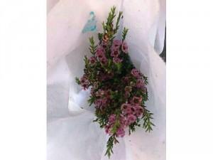 Hoa thanh liễu cành