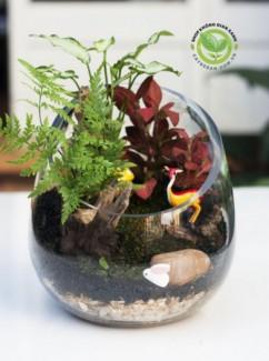 Terrarium thủy tinh vát xéo