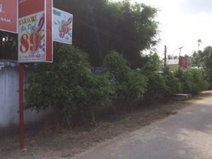 Sang đất và quán Karaoke