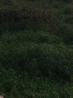 Đất thổ cư giá rẻ, sổ hồng, bao GPXD tại Vĩnh...