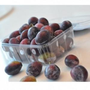 Chuyên cung cấp cây giống mận đường, giống mận nhập khẩu, mận đường,mận ngọt, mận