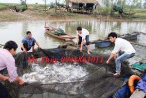 Lưới lồng bè nuôi cá tại Lạng Sơn, yên bái