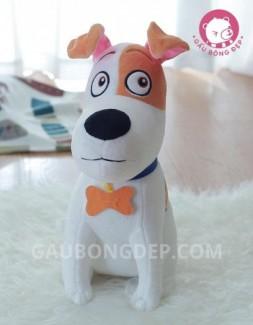 Chó bông Max - Pets's Life