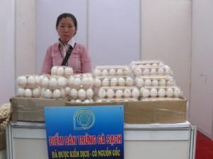 Trứng gia cầm sạch tại Nghệ An: