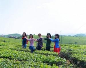 Mộc Châu mùa mận, mùa dâu tây - Săn mây đỉnh Tà Xùa (2N/1Đ)