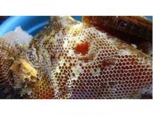 Mật ong nguyên chất,nếu giả trả tiền gấp đôi