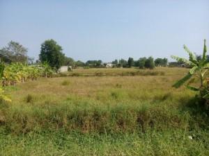 Lô đất 1,150m2 (31,5x36,5) thổ vườn, đường...