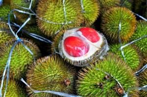 Bán cây giống sầu riêng ruột đỏ