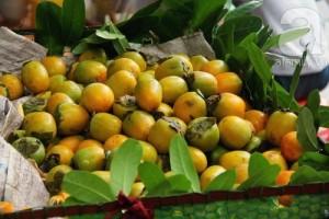 Bán cây giống hồng giòn, chuẩn giống, số lượng lớn, giao cây toàn quốc.