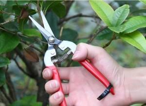 Kéo cắt hoa lưỡi thép không gỉ HM050