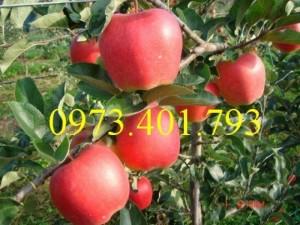 Giống táo mỹ vỏ đỏ ruột đỏ